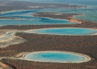 Shark Bay (Westaustralien).