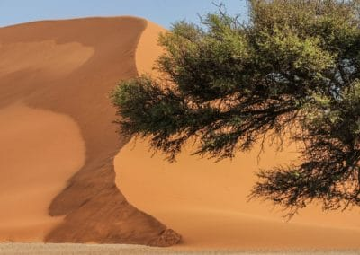 Die Namib-Wüste. Leben hat es hier schwer.