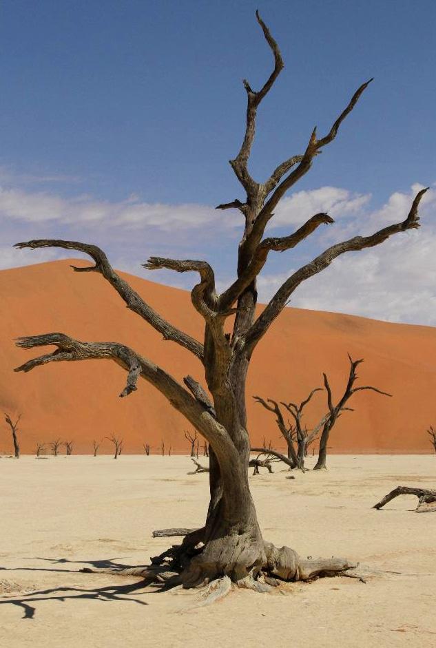 """""""Baumfriedhof"""" inmitten der Wüstenlandschaft,"""