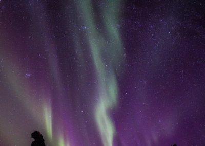 Nordlichter auf den Lofoten (Norwegen).
