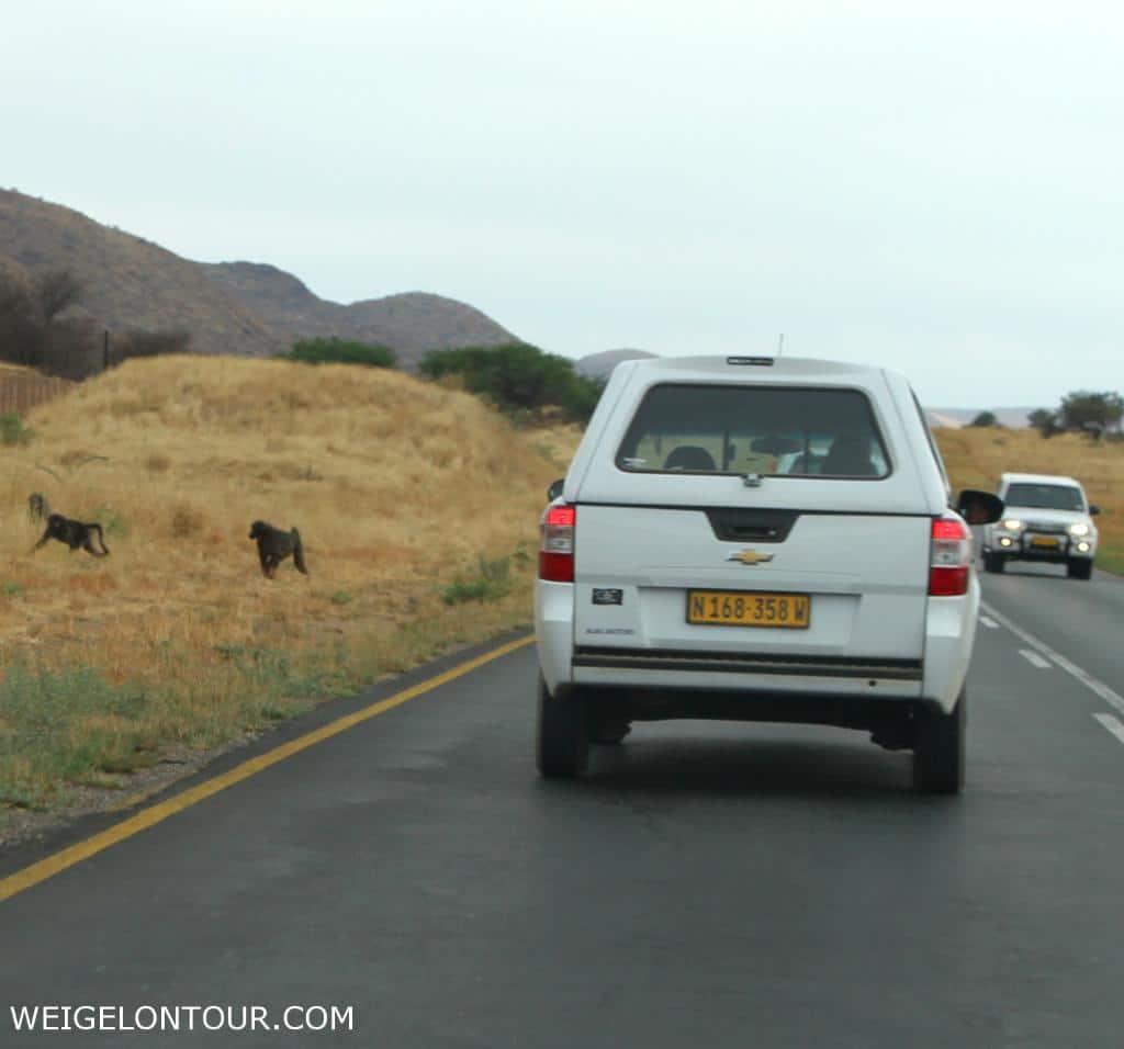 Dieser Schnappschuss, aufgenommen aus dem Auto in Namibia, zeigt Paviane am Straßenrand.