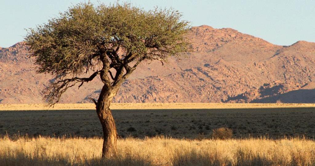 Das Gelände der Namtibs-Lodge liegt nur wenige Kilometer östlich der Namib. Das Hauptwasserloch musste 120 Meter tief gebohrt werden.