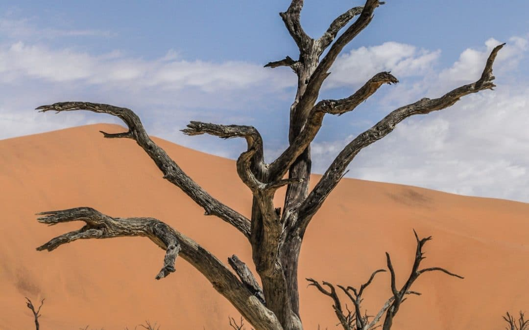Beauty of Namibia