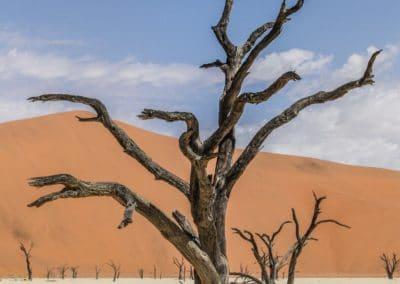 Akazienbaum in Namibia.